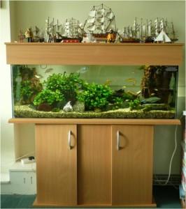Clients Aquarium